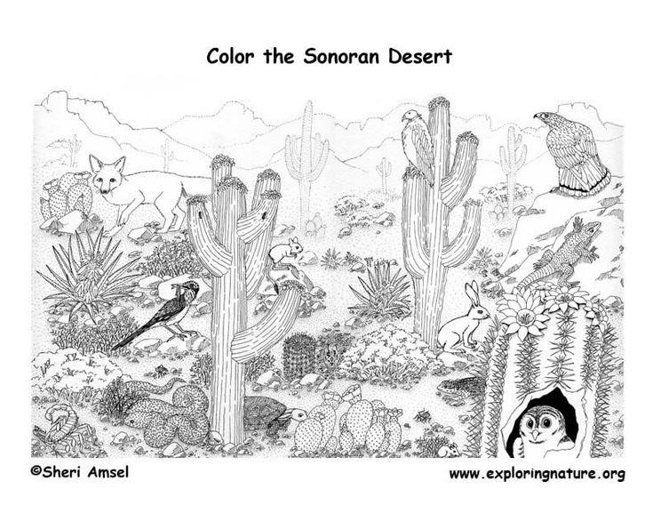 color-the-sonoran-desert
