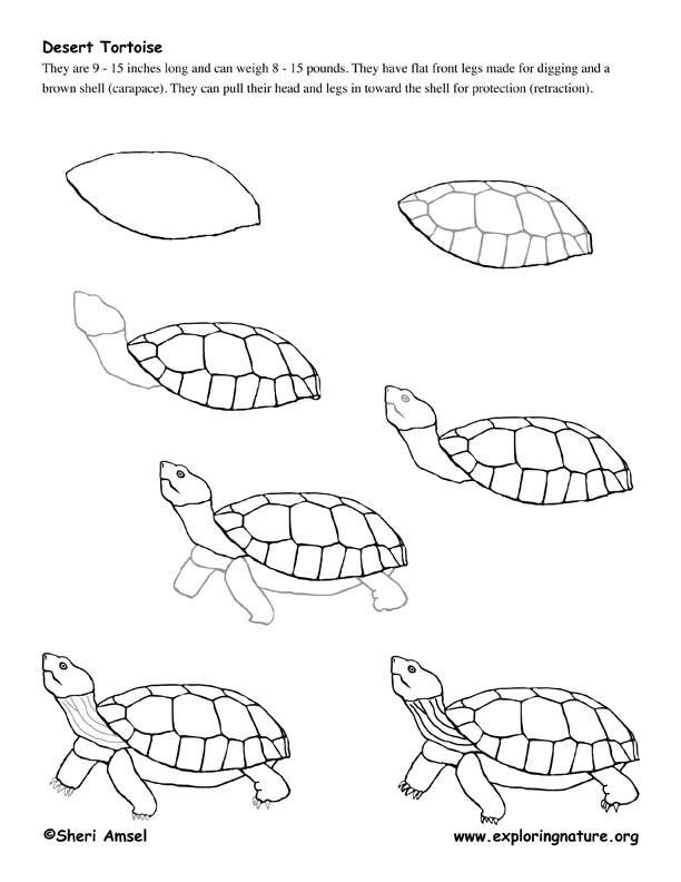 draw-a-tortoise